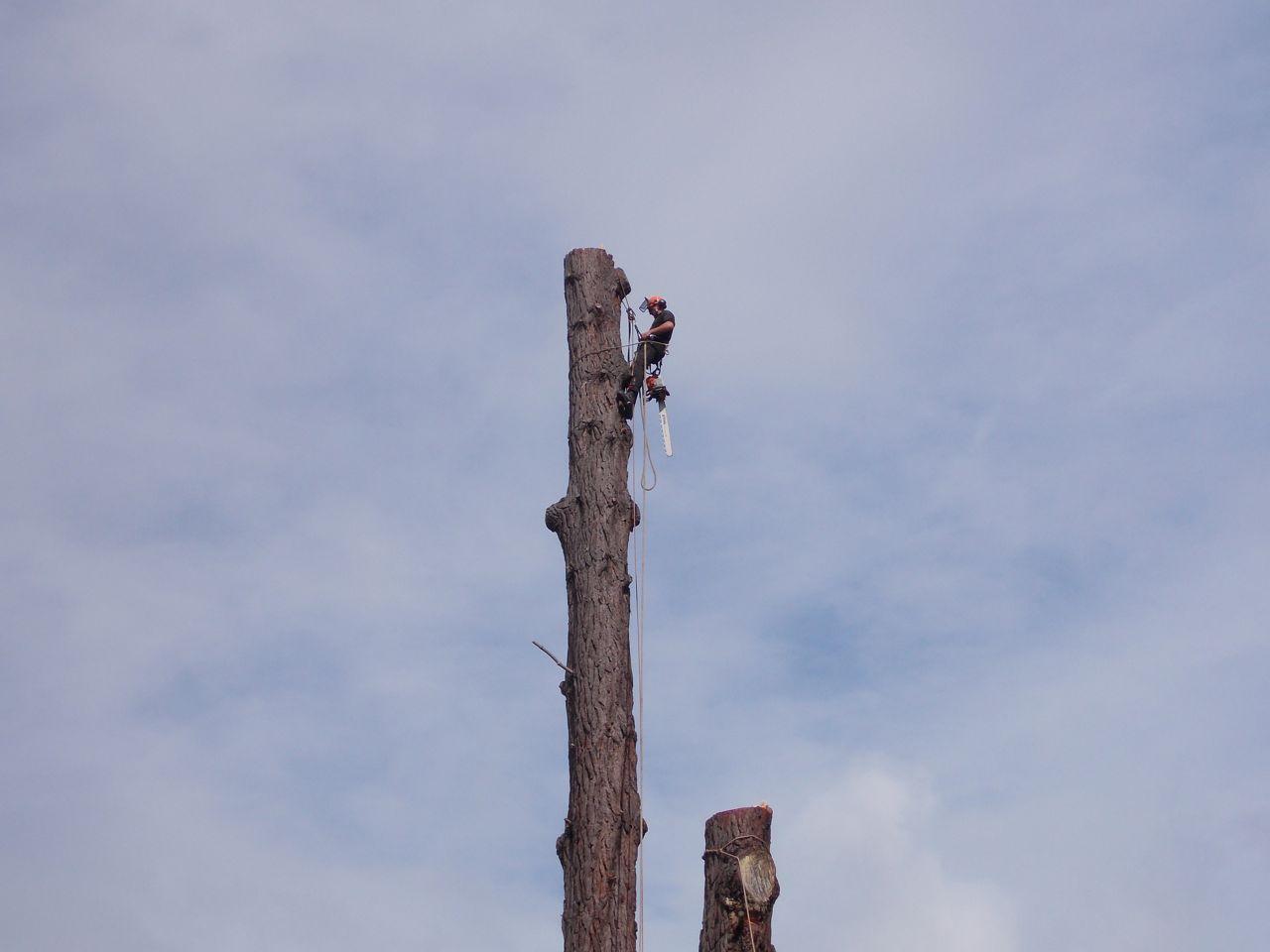 Tree_dismantle