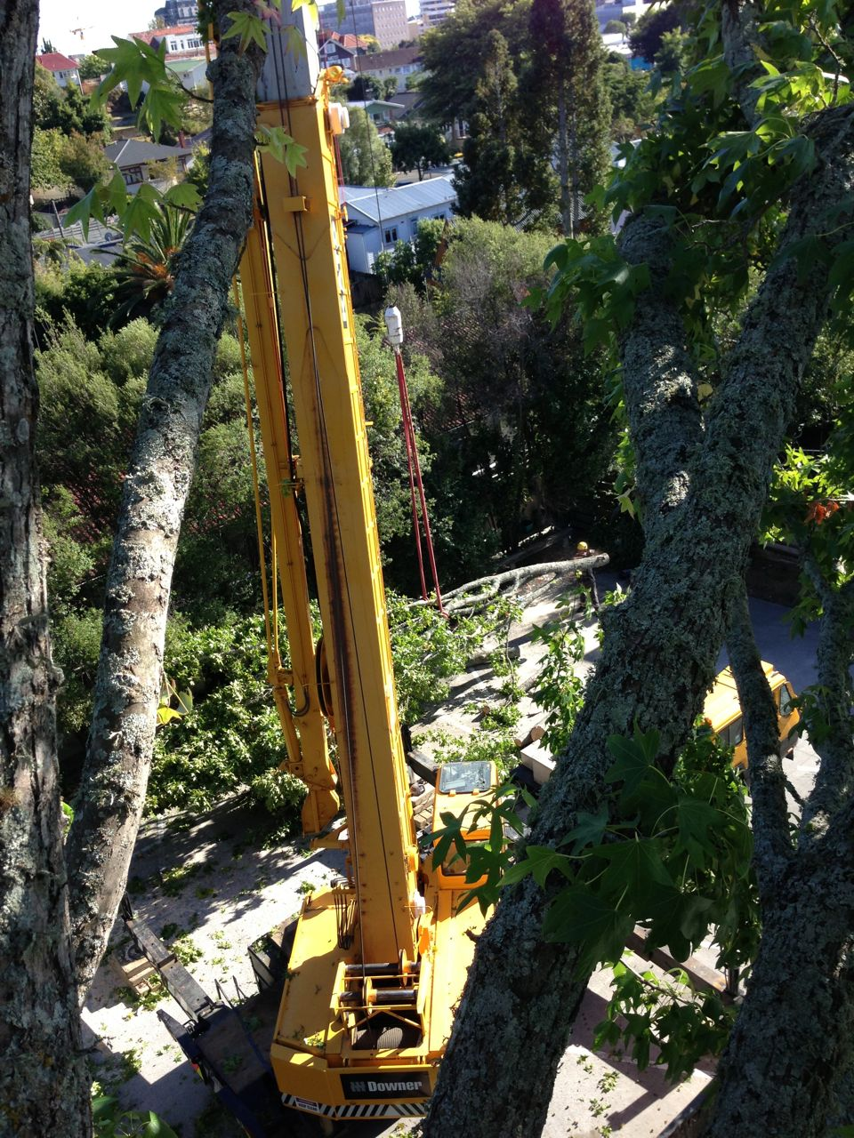 View_of_crane_tree_removal