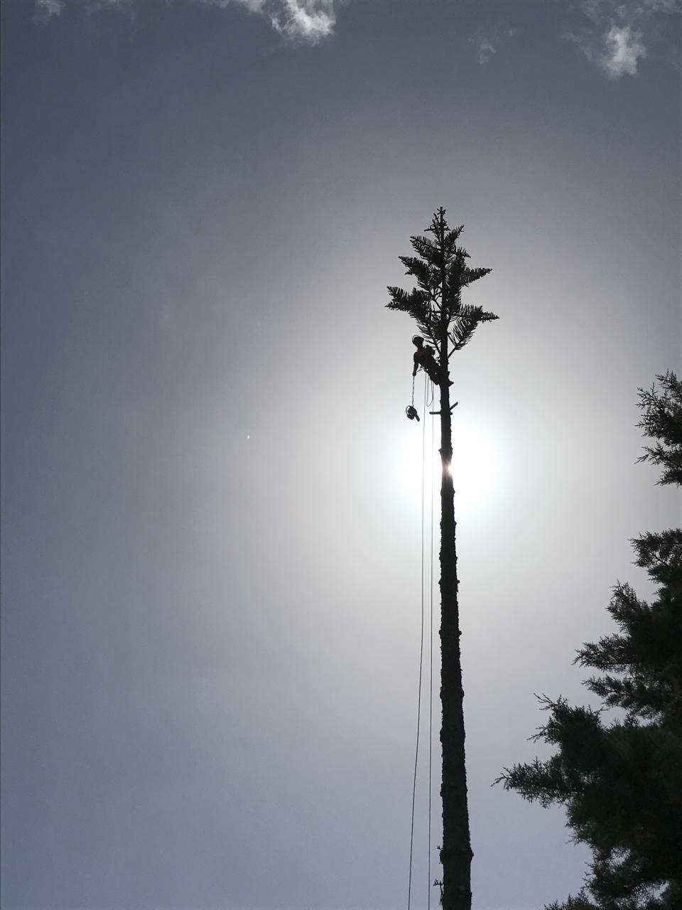 canopy-arborists-1
