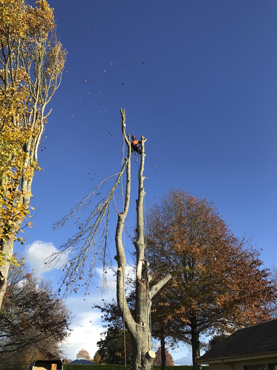 canopy-arborists-10