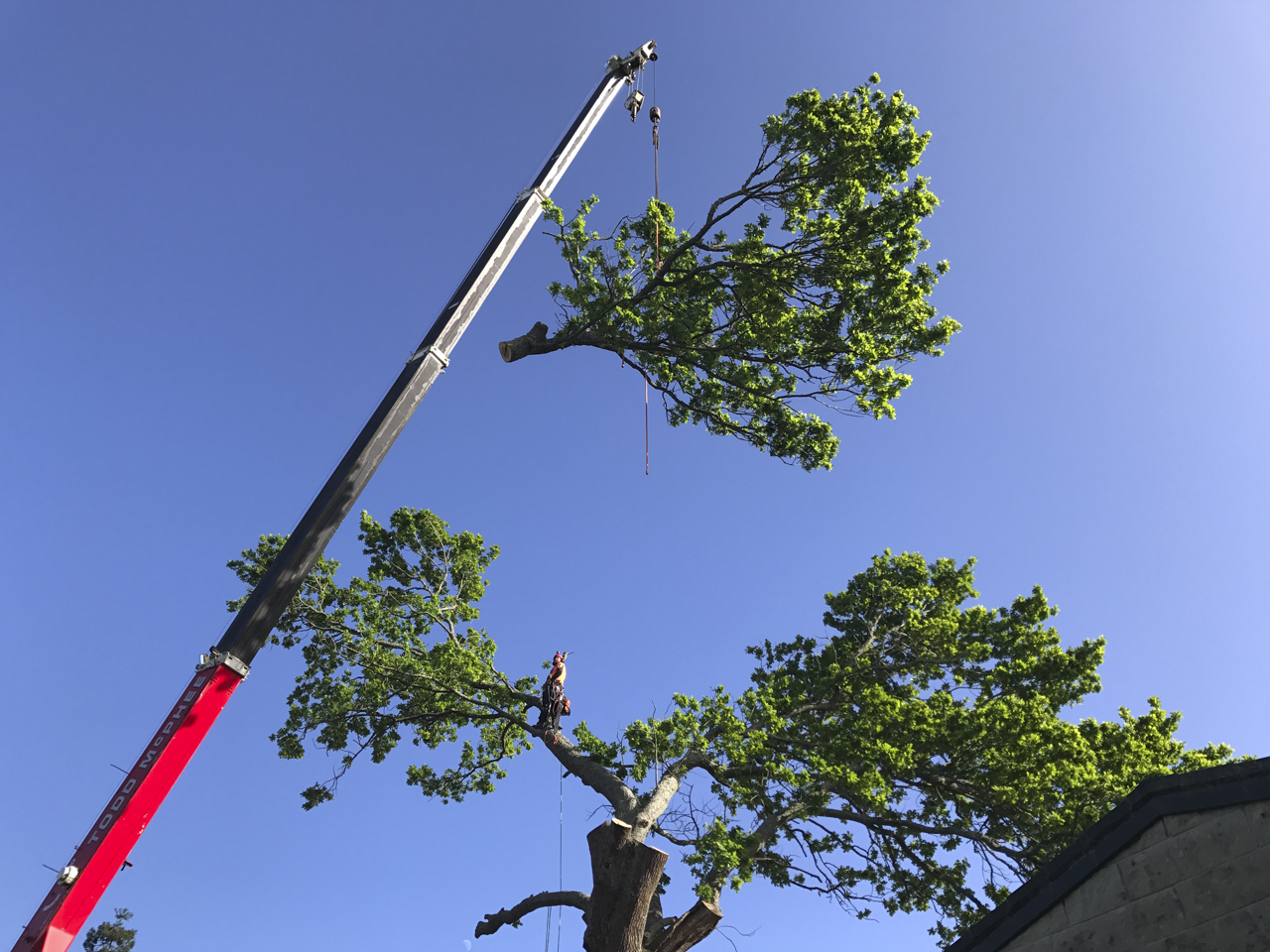 canopy-arborists-14