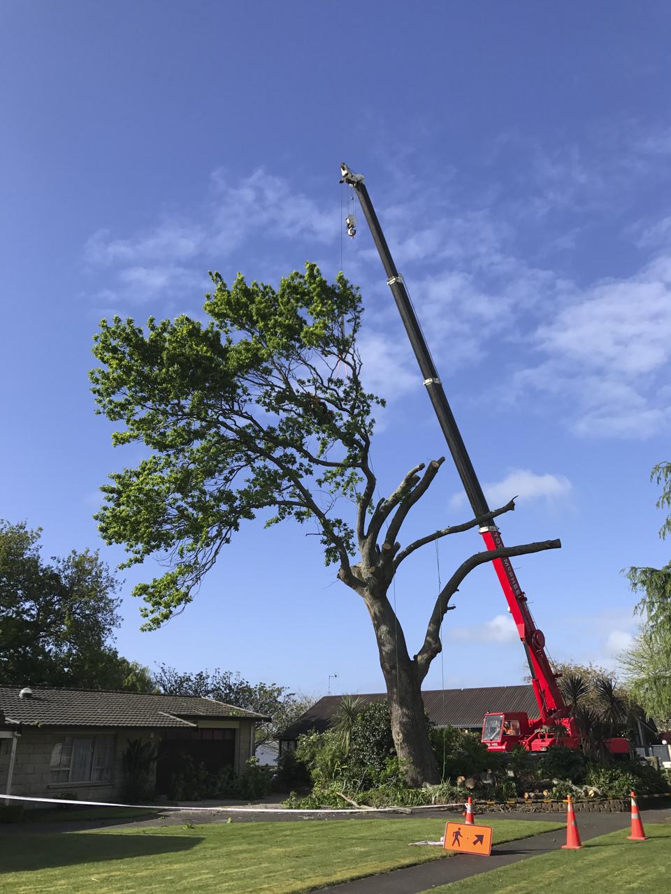 canopy-arborists-15