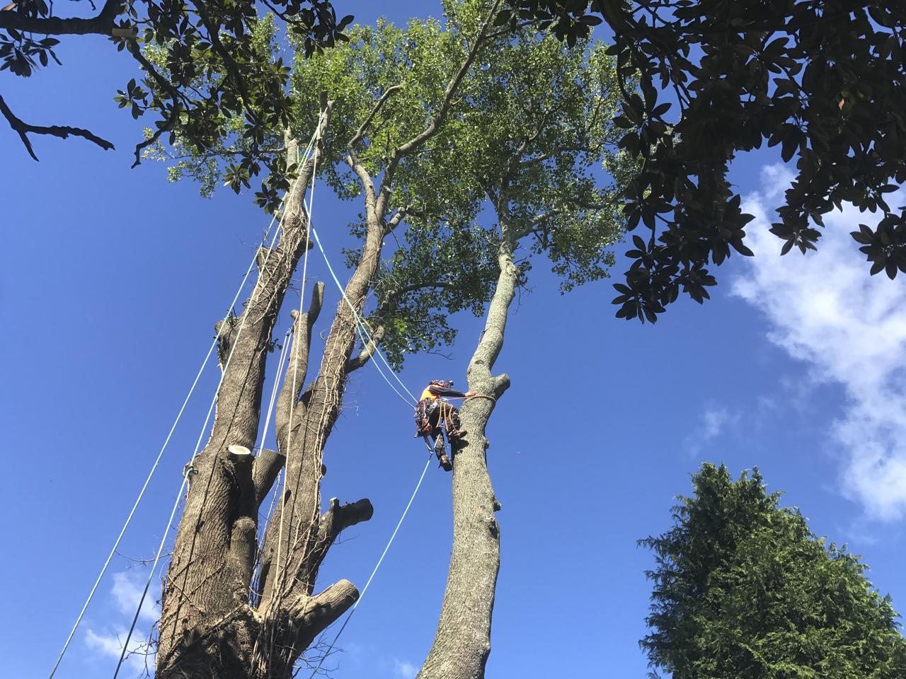 canopy-arborists-2