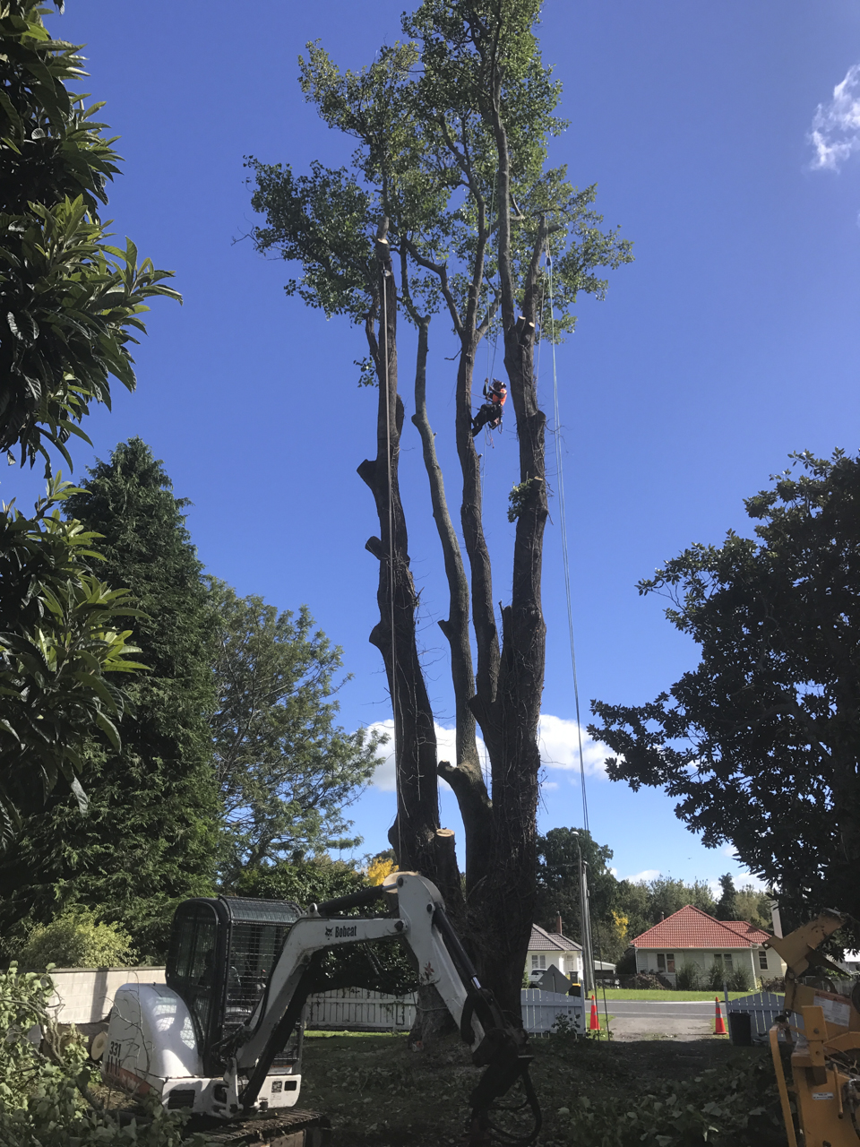 canopy-arborists-3