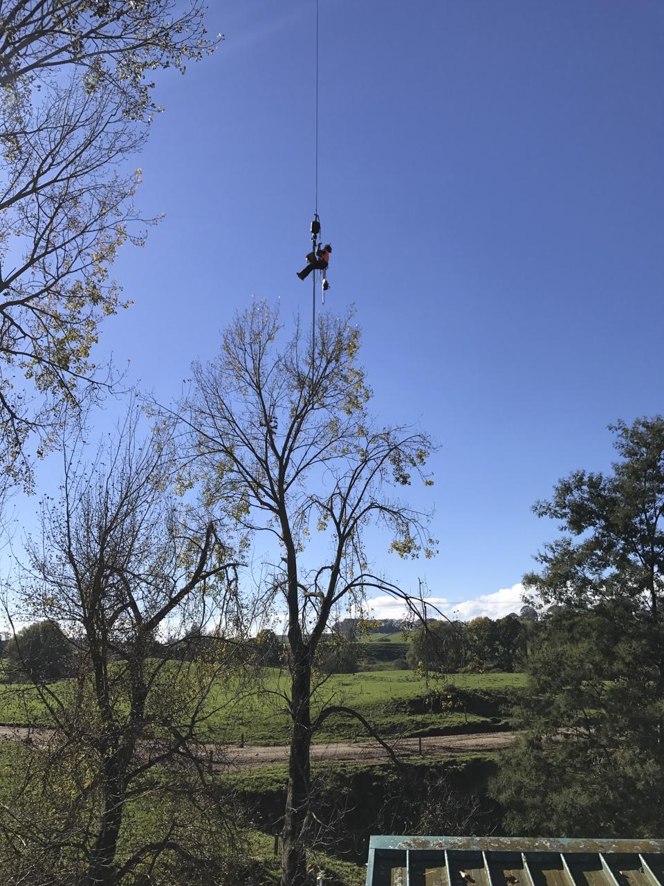 canopy-arborists-4