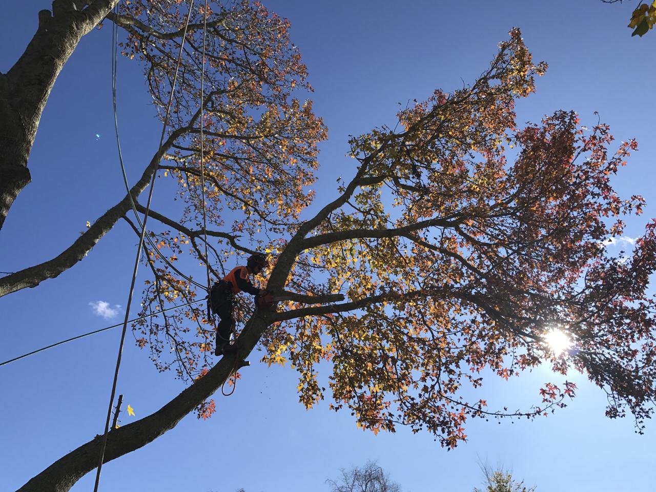 canopy-arborists-6