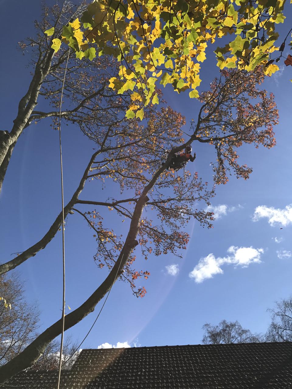 canopy-arborists-7